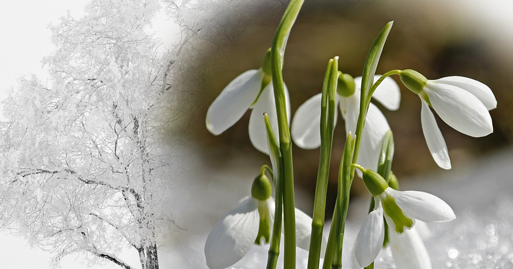 Aus Wintling wird Frühling