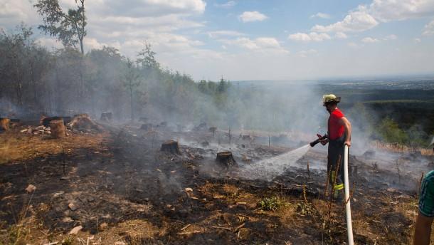 Umweltministerium warnt: Mit den Temperaturen steigt die Waldbrandgefahr
